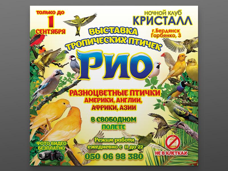 Дизайн афиши выставки птиц